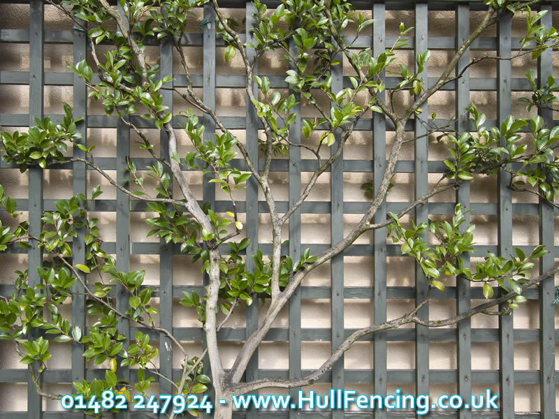 Decorative Trellis in Hull